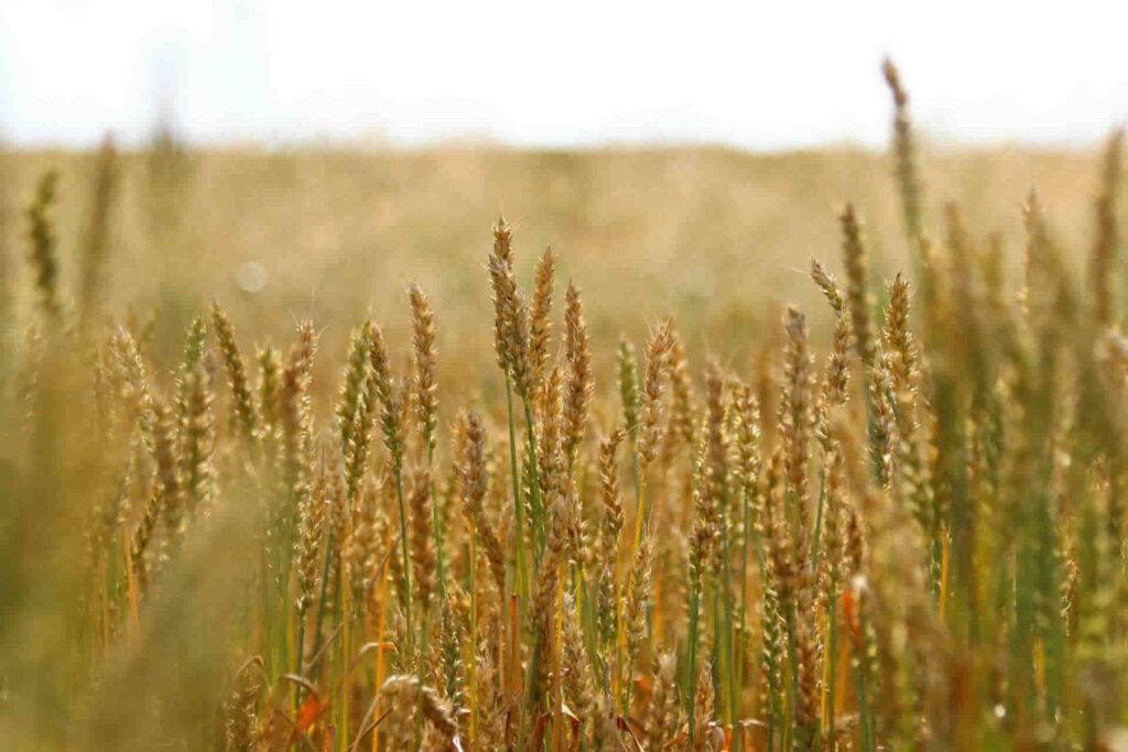 La agroecología, como opción competitiva y sostenible