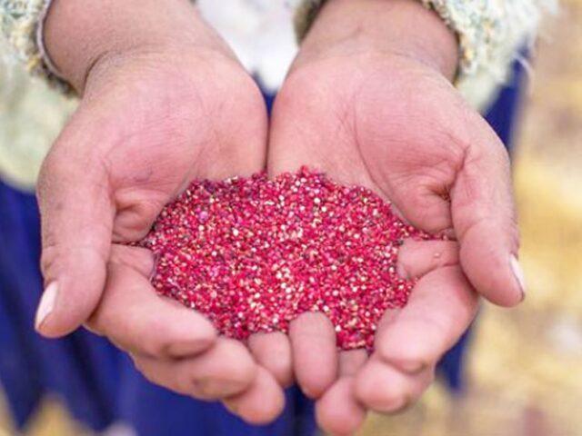 Perú se consolida como primer productor y exportador de Quinua en el mundo