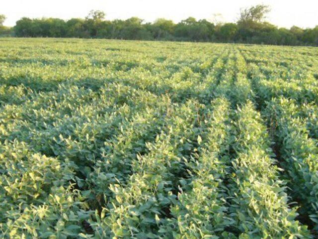Entre Ríos: Los cultivos evolucionan con humedad ajustada