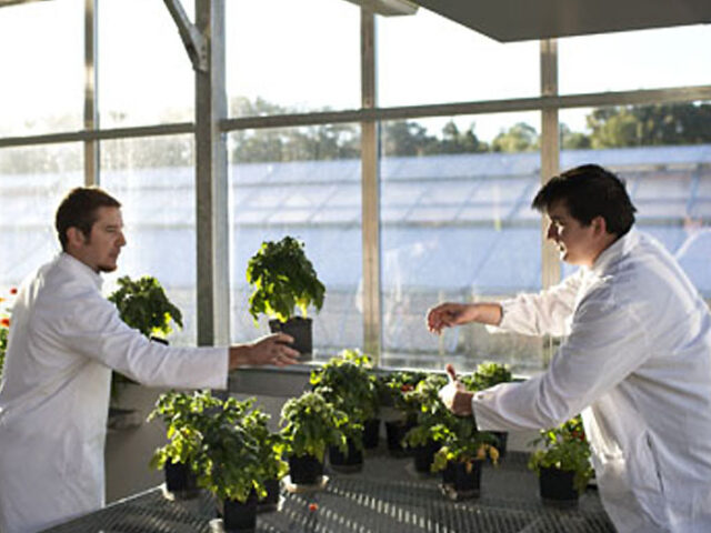 Presenta un innovador herbicida con nuevo modo de acción
