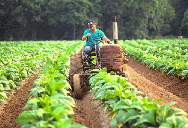 El sistema agrícola ganadero del futuro