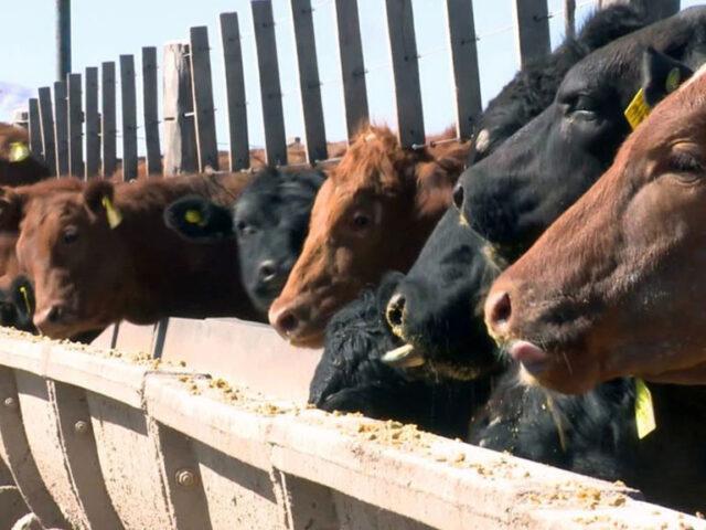 Para FAA, se reinstalaron ROEs encubiertos para digitar las exportaciones de carne