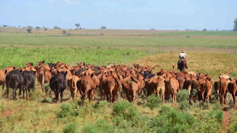 Lanzan en Santa Fe una convocatoria para proyectos de inversión en ganadería