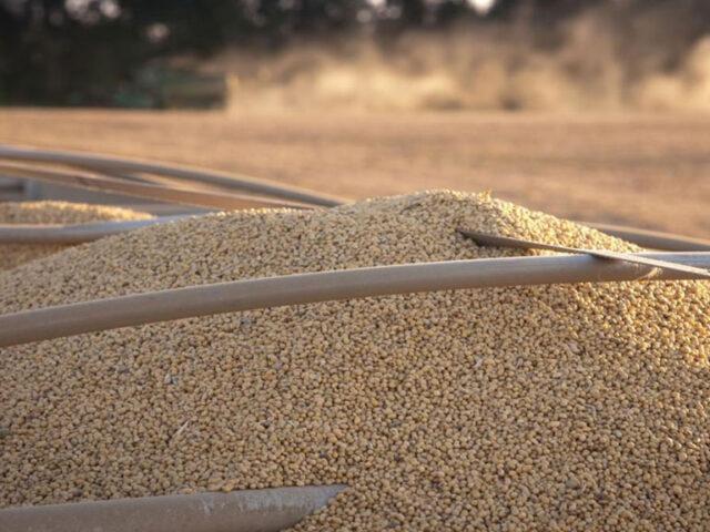 La diferencia de rendimiento en soja llega a 40 quintales entre el este y el oeste de la región núcleo