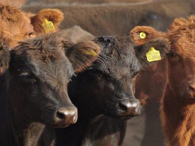 Argentina volverá a exportar genética bovina a Uruguay