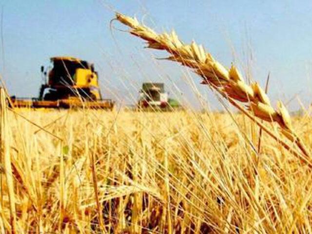 Caerán 16% las exportaciones de trigo