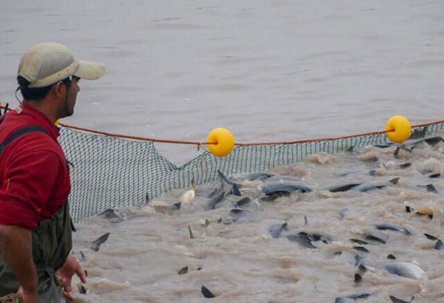 Instituciones trabajan en un acuerdo de cooperación para la producción acuícola en Argentina