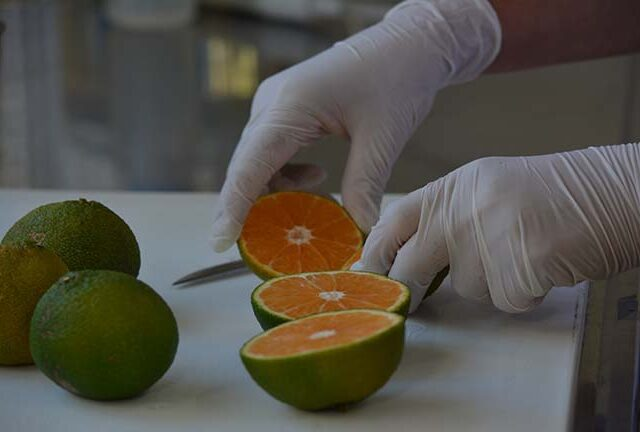Análisis de calidad interna de naranjas y mandarinas
