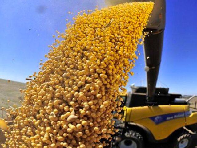 ¿Cuál es el potencial de la producción de soja argentina?