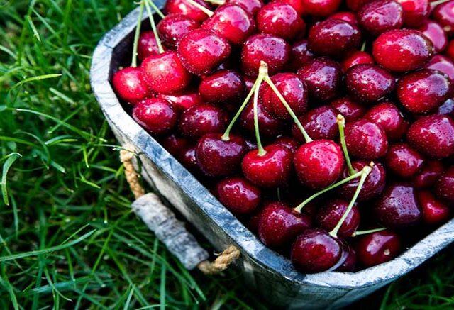 Las exportaciones de cerezas chilenas crecen 83% en volumen