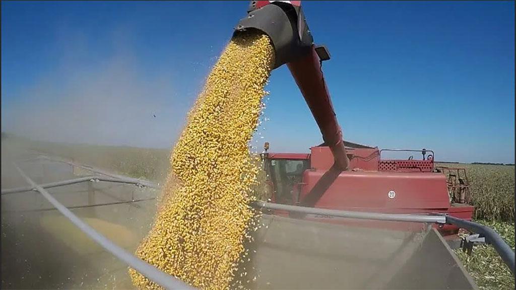 El lento secado de los granos demora la cosecha en maíz en San Luis