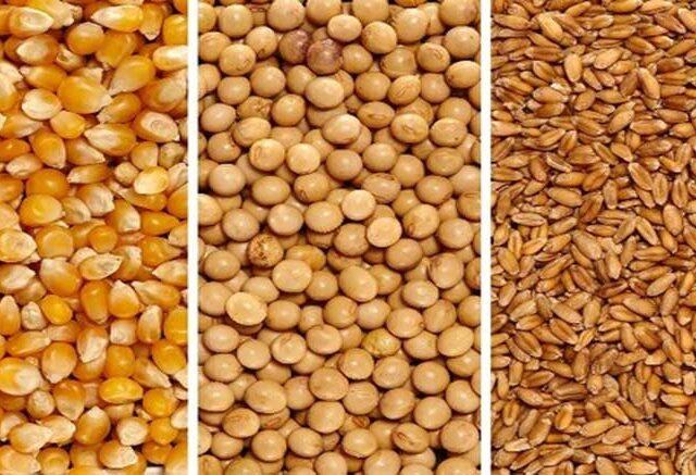 ¿Qué se viene en los mercados mundiales de commodities agrícolas?