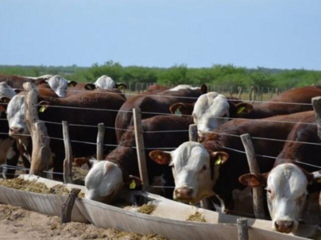 Lanzan créditos por $10 mil millones para el engorde de ganado, con tasa bonificada