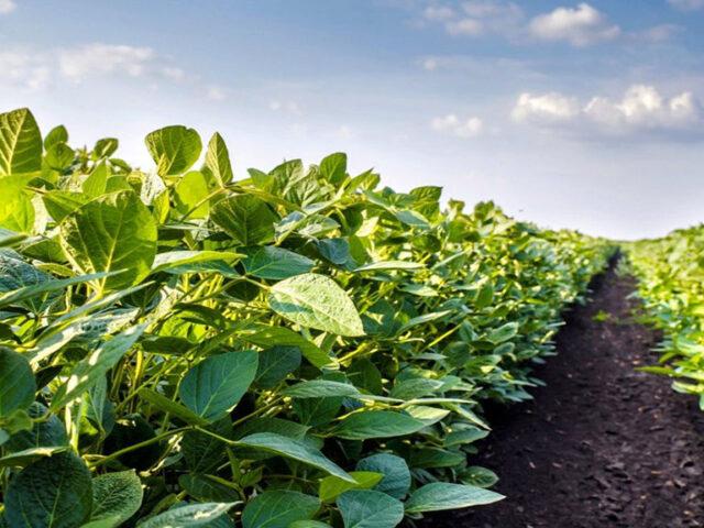 Estancada en rindes y con menores márgenes, la soja proyecta una caída mayor al 5% del área en la zona núcleo