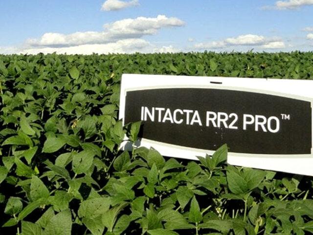 Bayer suspende el negocio de semillas y biotecnología de soja en Argentina