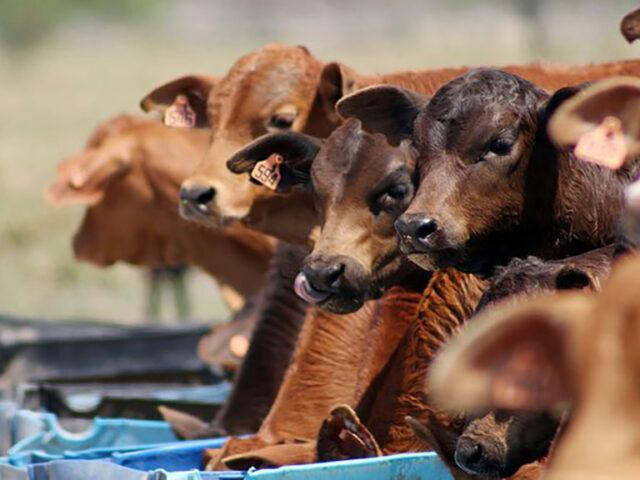 Oportunidades en el manejo de la alimentación para bajar costos de producción
