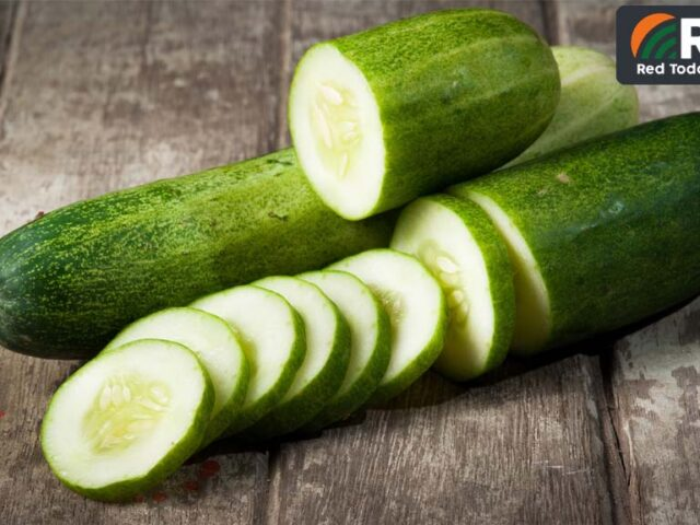Pepino, una hortaliza que se debe revalorizar