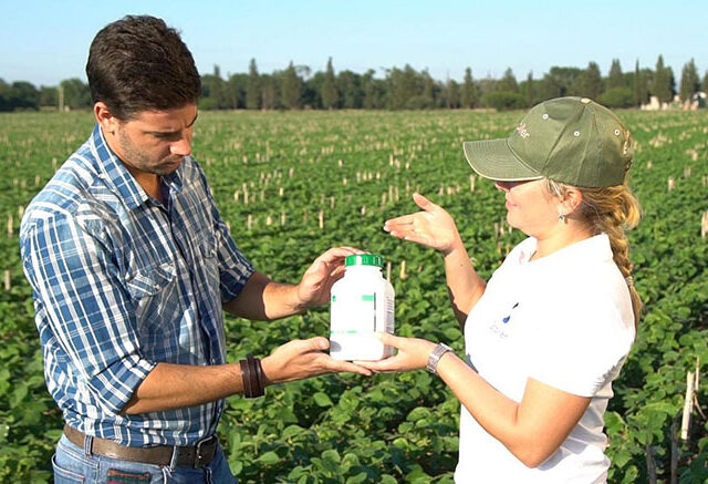 Fortalecer la soja con hormonas, para que crezca el resultado de la cosecha
