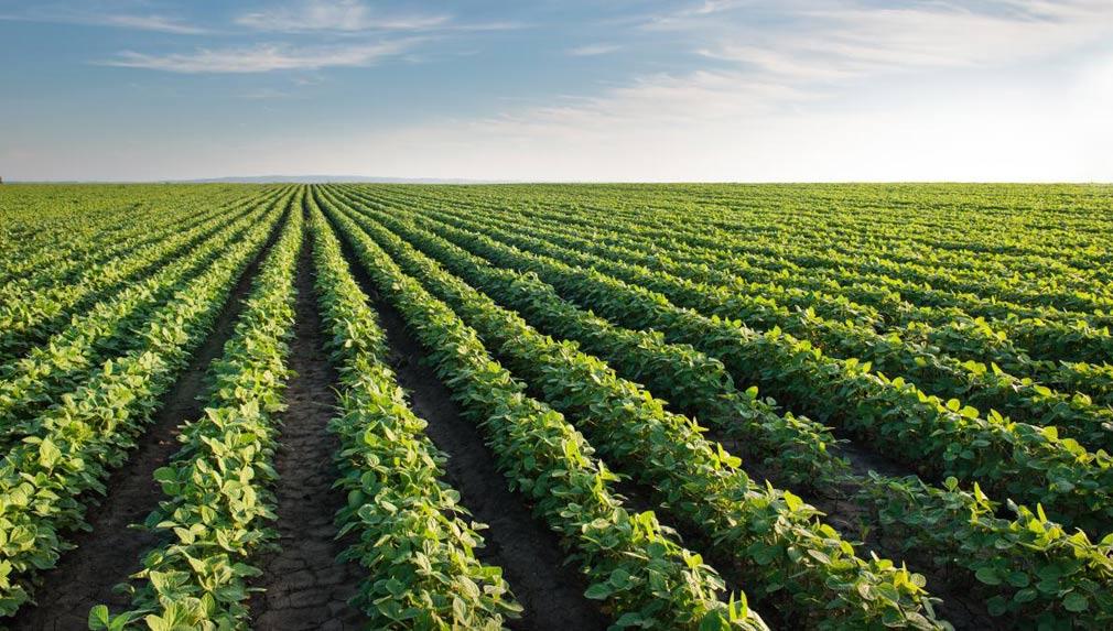 8 consejos para obtener alto rendimiento en el cultivo de soja