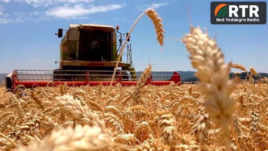 Argentina, de cara a la mayor cosecha triguera de su historia