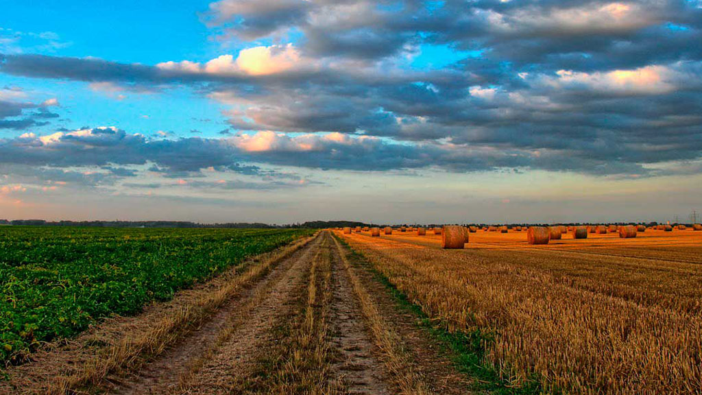 Sapo de otro pozo: Las tierras productivas argentinas, una inversión cada vez más atractiva para capitales externos