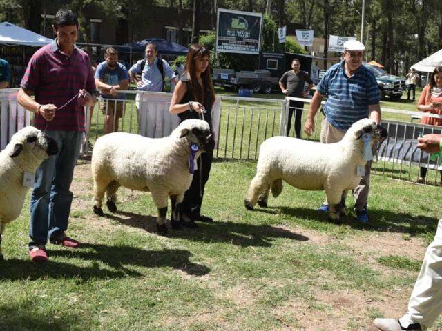 Se viene la Fiesta de la Cría del Cordero Cordobés más una ExpoFeria en la Rural
