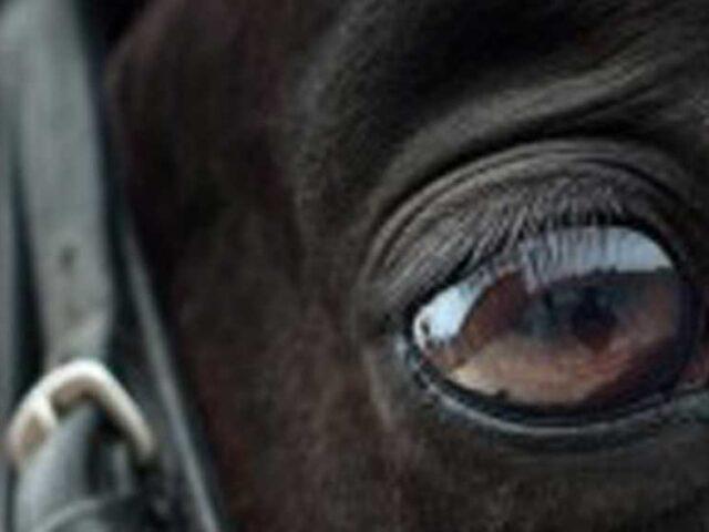 La tecnología ayuda a detectar el nivel de dolor en caballos