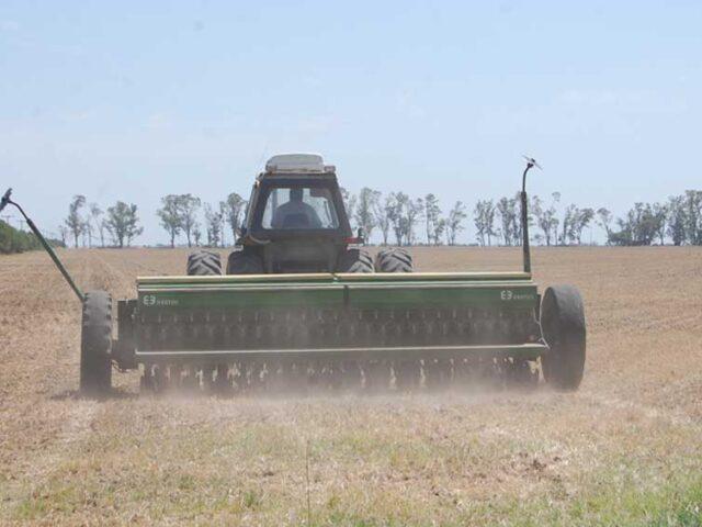 Se sembrarán más de 100 mil hectáreas de sorgo en Entre Ríos